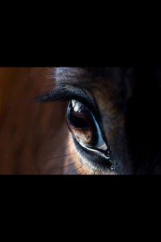 Horse eye !!