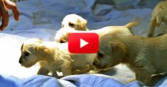 """This Sweet Dog Was Left at a Shelter While Pregnant with Six Puppies! Watch Her Incredible Must-See Story   TheAnimalRescueSite.com   """"When Mimi's family learned she was pregnant with puppies, they decided to take her to the shelter. Unfortunately, many puppies born into shelters don't make it. However, thanks to some help from a wonderful foster mom, Mimi was able to give birth in a real home — and all her puppies survived! Click to watch Mimi's rescue story (3:48)."""