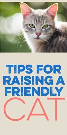Tips For Raising A Friendly Cat! :)
