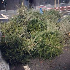 Friedhof der Weihnachtsbäume  Schade um die Bäume. #christmastree #christmasisover #knut #schade #verschwendung