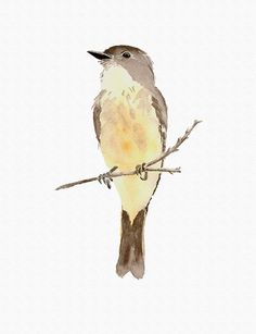 Phoebe Print from My Original Watercolor Painting by wrensroost, $14.00