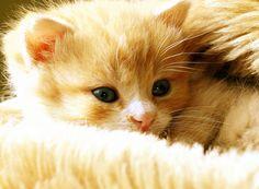 cute kitten snuggling in bed.