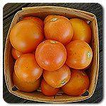 Organic Jaune Flamme Tomato