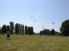 Chicago Fire Kite Team at the Chicago Botanic Garden 10th annual kite festival 8-09-2014