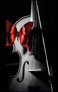 Music of your ❤