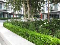 Saffron Square | London, UK | HTA Design #courtyard #planting #landscapearchitecture