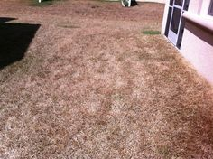 When drought stress gets bad enough with St Augustine grass you can often see foot prints that show up in the lawn.