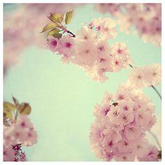Blumen Fotografie  fröhlich  Spring  Kirschblüte  von AliciaBock, $35.00