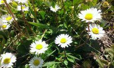 #il #sole #in #terra <3