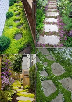 Create a blend of textures with grass(Creeping Sedums,Blue Star Creeper,Creeping Thyme and Sagina Subulata) and stepping stones.