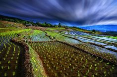 Mae Jam baby rice field by Wanasapong Jaiinpol on 500px