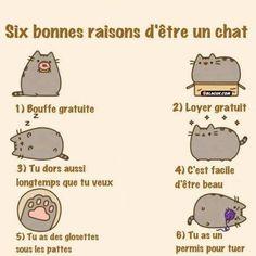 Images Six bonnes raison d'être un chat Images drôles Dessin humoristique sur Humour.com