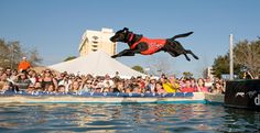 DockDogs at SEWE.....So much Fun!!