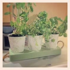 My kitchen herb pots