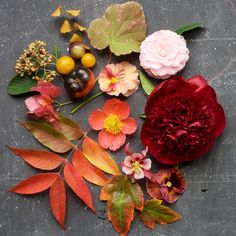 Two DIY Floral Arrangements Inspired By Autumn (Design*Sponge) Fall Flowers, Colorful Flowers, Beautiful Flowers, Fall Arrangements, Fall Diy, Floral Centerpieces, Backyard, Moving Costs, Gardens