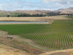 Marlborough : New Zealand wine region, north South Island New Zealand Wine, New Zealand Travel, Central Otago, New Zealand Houses, All Things New, North South, South Island, Auckland