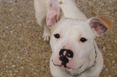 Votez pour Hasta sur www.zoomalia.com/photomalia #chien #concours #photos #zoomalia