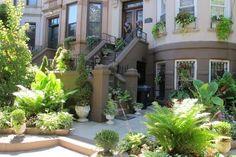Winner of Brooklyn Botanic Gardens' Greenest Block Contest - Lincoln Road from Bedford Avenue to Rogers Avenue, in Prospect-Lefferts Gardens