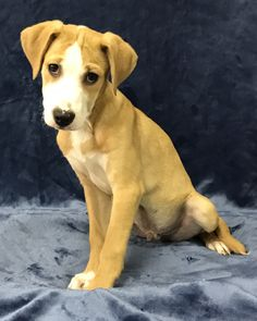 Obi-Wan Kenobi is part of a 6-dog Star Wars litter. He's a 4-month-old border collie and pitbull blend. He's a little shy at first, but is good with other dogs and cats. He's a lap puppy. Adoption fee is $200; includes neutering, microchipping, three shots, kennel cough shots and rabies. Visit Tails of Rescue Adoption Center, 981 Lake Blvd., Redding. Call 448-7444. Go to http://tailsofrescue.org. See more adoptable pets at http://www.redding.com/lifestyle/