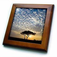 """Africa. Tanzania. Sunrise in Serengeti NP.-AF45 RBE0098 - Ralph H. Bendjebar - 8x8 Framed Tile by 3dRose. $22.99. Cherry Finish. Solid wood frame. Inset high gloss 6"""" x 6"""" ceramic tile.. Dimensions: 8"""" H x 8"""" W x 1/2"""" D. Keyhole in the back of frame allows for easy hanging.. Africa. Tanzania. Sunrise in Serengeti NP.-AF45 RBE0098 - Ralph H. Bendjebar Framed Tile is 8"""" x 8"""" with a 6"""" x 6"""" high gloss inset ceramic tile, surrounded by a solid wood frame with pre-drilled keyhole for..."""