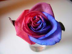 foro azulgrana/blaugrana: Bona Diada de Sant Jordi
