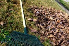 Recycle Fall Leaves -- rake up and shred leaves and leave them on your lawn, use them as mulch, or put them in the compost pile. GoGardenGo also shows you how to make leaf mold. Autumn Garden, Spring Garden, Zoysia Grass Seed, Waste Removal, Debris Removal, Junk Removal, Fall Cleaning, Lawn Sprinklers, Garden Guide