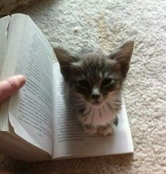 The perfect bookmark