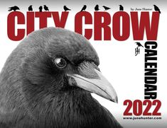 City Crow Calendar 2022 – June Hunter Images Crow Facts, Crow Photos, Moon Names, Crows, More Pictures, New Image, Fun Facts, The Neighbourhood