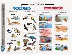 RECURSOS PRIMARIA   Esquema sobre los animales vertebrados e invertebrados ~ La Eduteca
