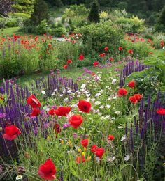 A scenery that reminds of Monet's Poppy Field in Argenteuil, where colorful blobs of paint start from a sprinkling of poppies. This casual and impressionistic planting combination is fairly easy to re-create and requires little maintenance.