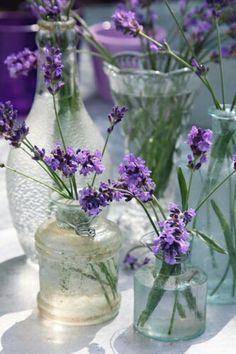 lavender. . . . .