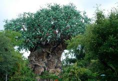 Tree of Live at Animal Kingdom #Orlando #Attractions #Sightseeing
