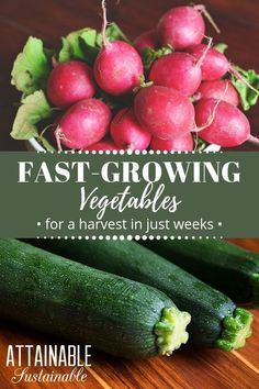 These vegetable crops are fast to mature. Choosing the fastest growing plants you can means that even if youre starting late, you can still harvest a crop this year. Sometimes the weather or life doesnt cooperate and you need to adjust your garden expectations -- these fast growing plants can help. #garden #veggiegarden #homestead via @Attainable Sustainable