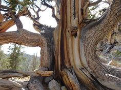 Santa Barbara Hikes - Trails, day hiking, backpacking in Santa Barbara, Montecito, Gaviota, Carpinteria, California