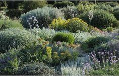 Un #jardin sec : pour un jardin sans arrosage // http://www.deco.fr/actualite-deco/369218-jardin-sec-jardin-arrosage.html