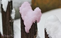 Snow Hearts in Nature