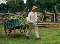 The cart ferried tobacco from the fields