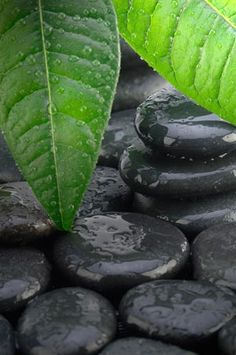 leafs with water dripping onto stones - confucius lao tzu chuang tzu and even zen buddhism was inspired by the i ching