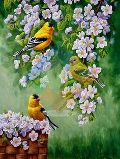 Original oil paintings of birds, bird art prints, canvas prints, greeting cards and other gifts for bird lovers by wildlife artist Crista S. Pretty Birds, Beautiful Birds, Ouvrages D'art, Watercolor Bird, Wildlife Art, Bird Prints, Animal Paintings, Bird Paintings, Painting Flowers