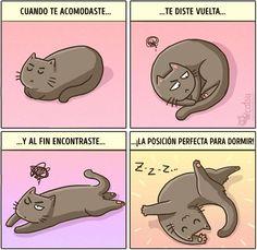 Cómic gato en casa posición perfecta para dormir