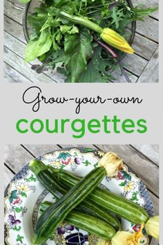 What is the key to growing courgettes successfully? I've tested out two ways of growing courgettes, and the difference is amazing. Indoor Vegetable Gardening, Veg Garden, Organic Gardening Tips, Container Gardening, Gardening Blogs, Garden Tips, Kitchen Gardening, Summer Garden, Planting Potatoes