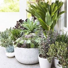New moto for all our green Stylephiles: if in doubt Green Garden, Garden Pots, Little Gardens, Potted Plants, Greenery, Terrace, Garden Design, Planter Pots, Succulents