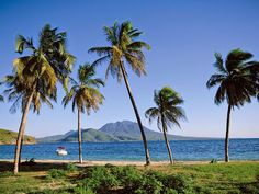 Beautiful palm trees line the tranquil coast of the Caribbean island of St. Celebrity Cruise Line, Celebrity Cruises, Southern Caribbean, Caribbean Cruise, Beach Trip, Beach Travel, Dream Vacations, Family Vacations, Beautiful Islands