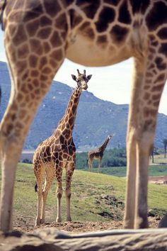 Safari Park - San Diego, California