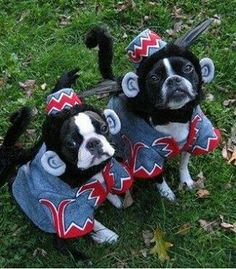 Flying Monkeys!  Good costume for Luigi and Sampson!