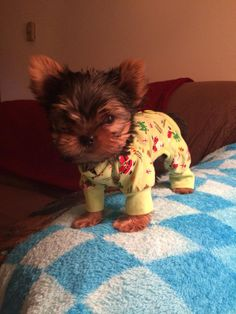 f94641c1d8d0a The cutest puppy ever wearing pajamas you have to see this – Adorable  pictures of dogs wearing clothes. Smalldogclothes.info · Small dog clothes