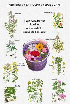 Adelgazar juan la para de hierba sirve san