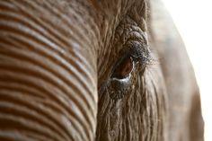love this elepant eye photo~!
