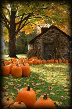 colorful autumn scenes | crisp Fall day bedecked with bright orange pumpkins, colorful Autumn ...