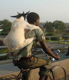 Yo pedaleo: En bicicleta con tu perro